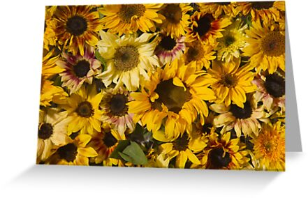 Ah! Sunflowers by papillonphoto