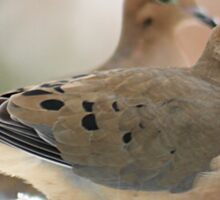 Two mourning doves Sticker