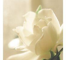Gardenia Photographic Print