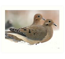 Two mourning doves Art Print