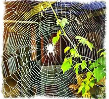 Weaving the web by Jenny Clift