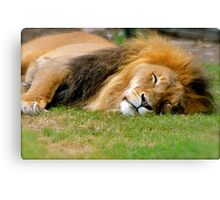 All tuckered out! Canvas Print