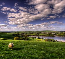 Dart valley Sheep by Rob Hawkins