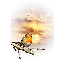 Robin At Sunset  Photographic Print
