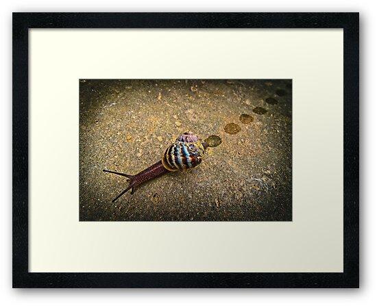 Snail Trail...... by Geoff Carpenter