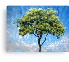 Mall Tree Canvas Print