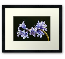 Bluebell flowers Framed Print