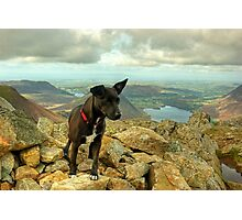Tarn the Terrier.... on High Stile Photographic Print