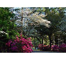 The Garden Path Photographic Print