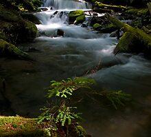 Goat Creek Sunbeam - Snoqualmie N. F. by Mark Heller