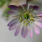 Anemone  - JUSTART © by JUSTART