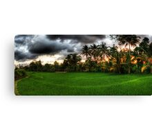 An Indonesian Rice Paddy at Sunset Canvas Print