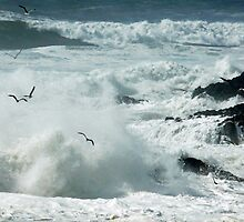 flying through the spray by tego53