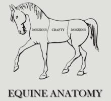Equine Anatomy by dgoring