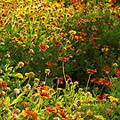 Wildflower patch with a punch by  B. Randi Bailey