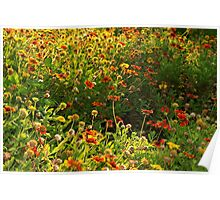 Wildflower patch with a punch Poster