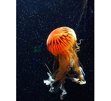 Under the Sea Photographic Print