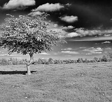 Lone Thorn by Dave Godden