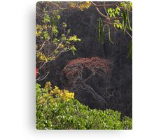 Blooming Tree On The Rock Wall - Arbol Floreando En El Acantilado Canvas Print