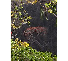 Blooming Tree On The Rock Wall - Arbol Floreando En El Acantilado Photographic Print
