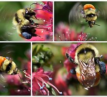 WHAT'S THE BUZZ ALL ABOUT by Betsy  Seeton