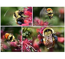 WHAT'S THE BUZZ ALL ABOUT Photographic Print