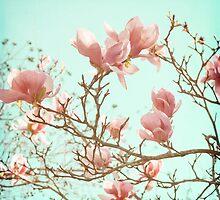 Japanese Magnolias by Carina Potts
