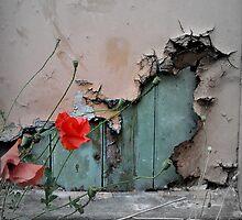 Poppy by Florem