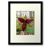 Wake-robin, Red Trillium Framed Print