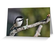 Black-capped chickadee perched on a branch Greeting Card