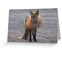 First Red Fox of the Season Greeting Card