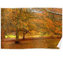 Colours of Autumn II - Mt Lofty Botanic Gardens, Adelaide Hills, SA Poster