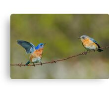 Courting Bluebirds Canvas Print