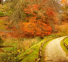 Autumn Paths - Mt Lofty Botanic Gardens, Adelaide Hills, SA by Mark Richards