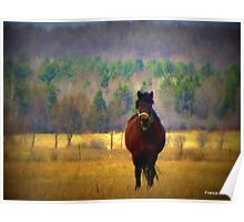 Ranch horse Poster