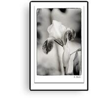 Iris in Black & White Canvas Print