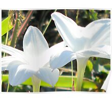 Purity - Food for Thought - Mature Rain Lilies Poster