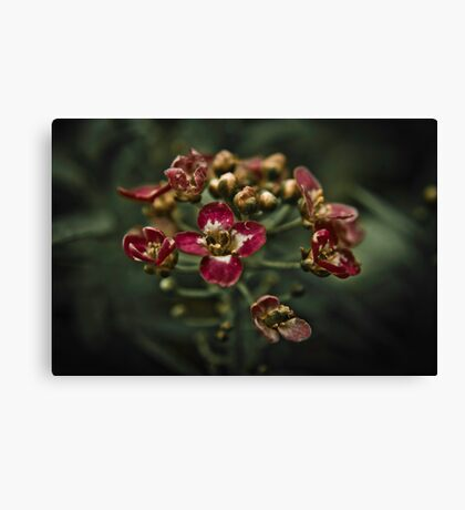 Flower Blossoms Canvas Print