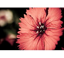 Moon Flower Photographic Print