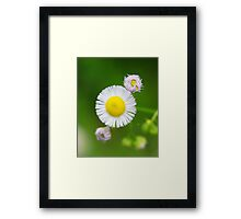 Wild flower detail with rain drop on bloom  Framed Print