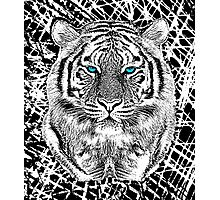 Tiger Portrait Black and White in Graphic Etching Style Photographic Print
