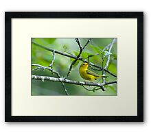 Are You Still There Lady???? Framed Print