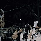 Evening Moon Through The Fall Leaves.. by mysticrivers