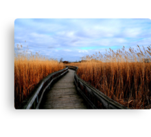 A Walk through the Phragmites Canvas Print