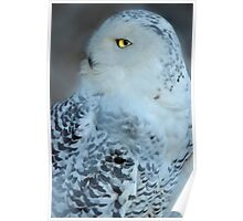 Great White Owl Poster
