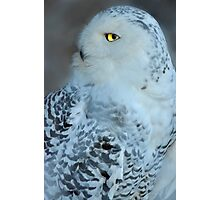 Great White Owl Photographic Print