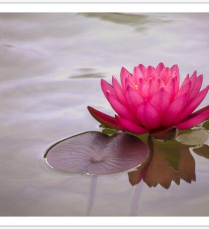 Serenity in pink Sticker