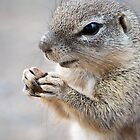 World Peace? ..I Pray For Nuts.. Duh!! by sonoflite
