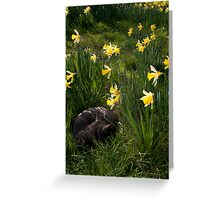 Tilt Shift Cat in Daffodils Greeting Card