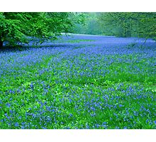 Into a sea of blue Photographic Print